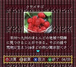 BS Fenek - 6 Getsu (Japan)
